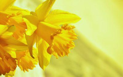 Betesda-säätiö toivottaa kaikille Hyvää Pääsiäistä!